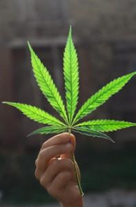 Marijuana libera, basta ipocrisie